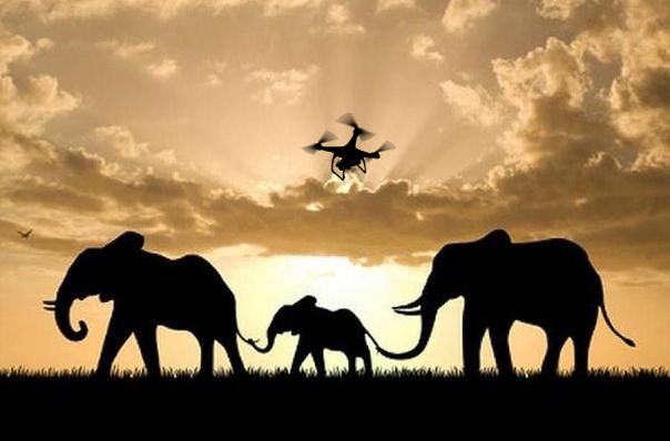 В Танзании используют дронов для спасения популяции слонов